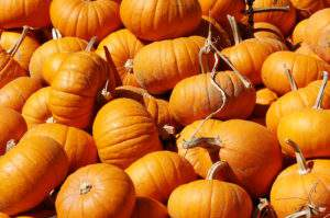 The amazing versatile pumpkin, a true super food