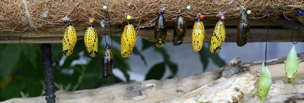 A line of cocoons.