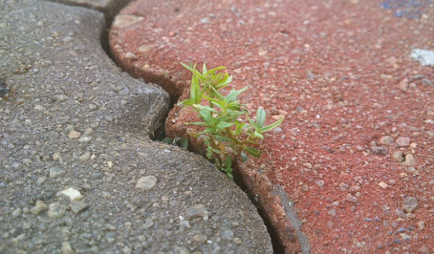 Plant growing in a crack.