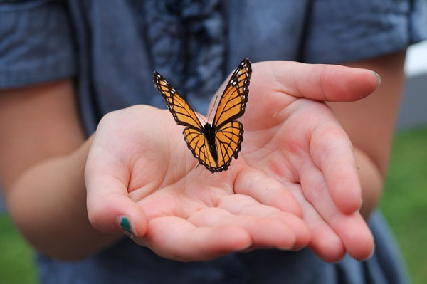 Woman's hands releasing butterfly.